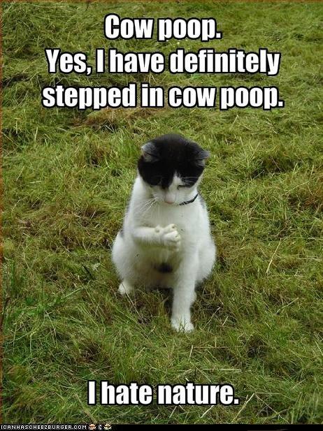 cow poop